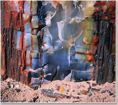 Petrified Wood and Sand - Bill Atkinson Photography