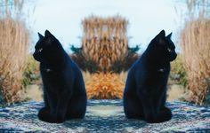 KATTENFOTO'S | CAT PICTURES