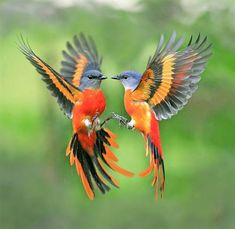 Too bad there is no information on the identification of such beautiful birds.