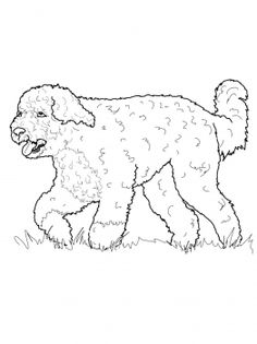 113 Best favorite Dog Colouring pages images | Dog ...