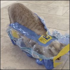 """Animated CAT GIF • Funny Cat uses bottle pack as his house because... 'If it fits... I sits' """"What? I sit and I sleep everywhere and anywhere because CAT."""""""