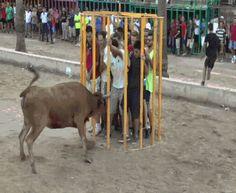 Não contava com a astúcia do touro | Los Gifs