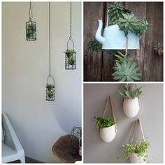 nunca dejarn de ser un excelente elemento para decorar tu hogar adems tener plantas siempre