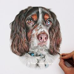 It's easy to commission an original portrait of your dog - timeless and unique, and drawn just for you in coloured pencil or pastel by UK artist Angie. Colored Pencil Portrait, Colored Pencil Artwork, Colored Pencils, Graphite Drawings, Pencil Art Drawings, Wolf Drawings, Realistic Animal Drawings, Drawing Animals, Color Pencil Sketch
