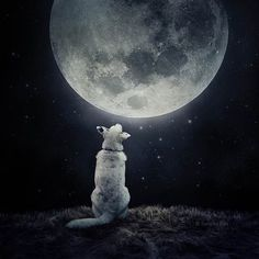 """The photographer cites this image of a dog basking in moon glow as her personal favorite of all time, """"because my sister will soon give birth to her first child and they have this picture in their bedroom,"""" she told TODAY.com."""