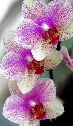 Designs For Garden Flower Beds Orchid By Davidroman Flowers Nature, Exotic Flowers, Tropical Flowers, Orchids Garden, Orchid Plants, Wonderful Flowers, Beautiful Flowers, Bloom, Phalaenopsis Orchid