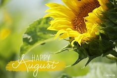 happy august - with big sunflower -  nice!