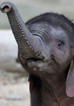 Ghetto elephant tube