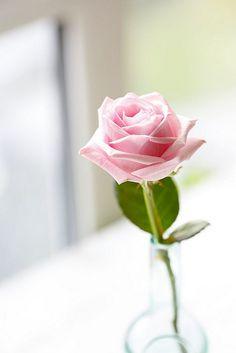 A timelessly elegant single pink rose. #flowers #roses #wedding #pink #beautiful