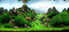 tropical freshwater aquarium | Manage your freshwater aquarium, tropical fishes and plants: August ...