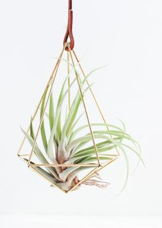 Teardrop Brass Airplant Holder | handmadesammade on Etsy