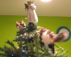 Steps to show how cats decorate a Christmas tree