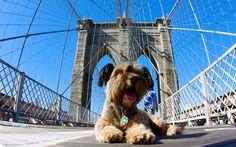 #viagem #cachorro #oscar Nova York