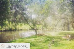 Today #gutsygirlart #retreat  #Repost @_gypsy_vibes_  Epona Vibes Retreat #gypsyvibes #eponavibesretreat #fernyglen #beautifulday #happy #freedom #love #light #laughter #drumming #equinereader #beauty #bliss #journaling #goddessphotography #firecircle #horses #journalingworkshop #adornment #ceremony #veganwholefood #sisterhood #sistercircle