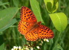 orange butterflys | Sunday, June 25, 2006