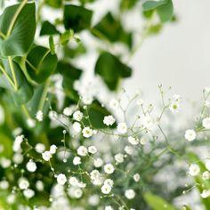 昔から見慣れていて気に留めていなかった花が急に輝いて見える事がありますこんなに可愛かったっけとこのかすみ草もそうでしたぐっと近づいて見てみたらトイプードルの顔に見えてきて可愛さ倍増ですかかわいー #北欧暮らしの道具店#花#お花#ザ花部#花のある暮らし#花のある生活#朝#あさ#朝時間#かすみ草 by hokuoh_kurashi