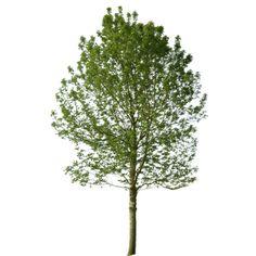 Tree | Immediate Entourage