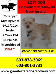 Missing DEAF white Male Terrier in New Ipswich NH. Scrappy is approx. 2 Years old and weighs 15 Pounds and his micro-chipped. He was last seen Ashburnham Rd/ Ashby Rd on Sept 17. Please Call 603-878-2069 or 603-801-3731with any information. Please Do Not Chase.