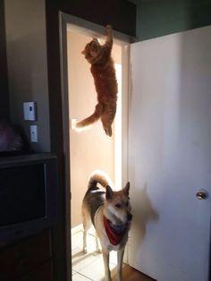 30 chats qui maîtrisent l\u0027art de se cacher comme personne. De vrais ninjas! Mission  ImpossibleCat