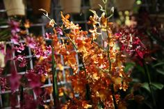 Image result for orchid display