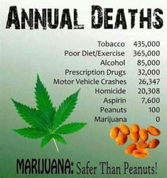 -> Tag a friend with a Peanut Allergy - - - - - Medical Benefits Of Cannabis, Medical Marijuana, Stone Quotes, Marijuana Facts, Memory Problems, Seeds For Sale, Nut Allergies, Cannabis Plant, Fitness Diet
