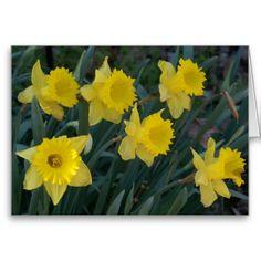 Daffodils, Greeting Card.