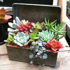 Sedum Projects & DIY Succulent Planters I've a secret. I used to hate succulents. I believe I used to be influenced rising up within the in California, the place succulents had been often half useless hen and chicks fil. Succulents In Containers, Cacti And Succulents, Planting Succulents, Potted Plants, Garden Plants, Indoor Plants, House Plants, Planting Flowers, Diy Garden