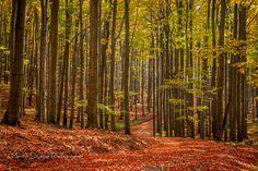 walking through the forest by Martin Slniecko on 500px
