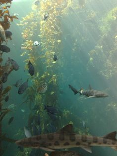 kelp forest images | Kelp Forest | Flickr - Photo Sharing! Underwater Photography, Nature Photography, Photography Tips, Kelp Forest, Dark Forest, Life Aquatic, Water Life, Ocean Creatures, Seascape Paintings