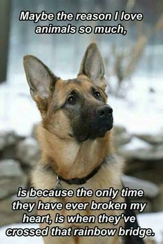 Wicked Training Your German Shepherd Dog Ideas. Mind Blowing Training Your German Shepherd Dog Ideas. Animal Quotes, Animal Memes, Funny Animals, Cute Animals, I Love Dogs, Cute Dogs, Schaefer, German Shepherd Puppies, German Shepherds