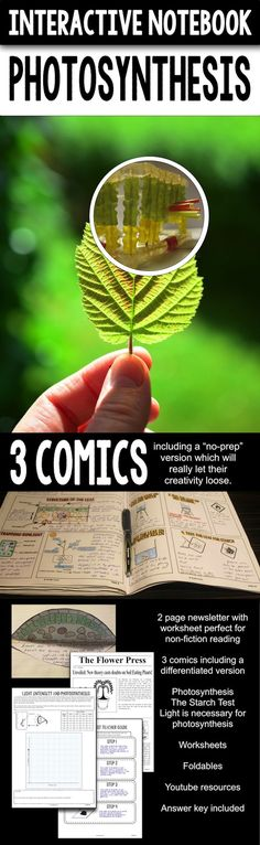 34 page Science interactive notebook on photosynthesis.