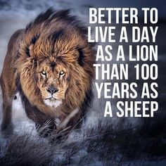 - Lions don't lose sleep over the opinions of sheep. While the sheep are grazing the lion is planning and hunting for the pride protecting and expanding his territory. . BE THE LION. . It doesn't matter what you look like whether youre intimidating or have a powerful demeanor. What matters is your ability to lead. . Develop the confidence to stand alone even when the world is telling you no. Cultivate the courage to make tough decisions and the compassion to listen to the needs of others. A…