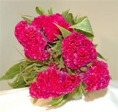 i love coxcomb.they dry beautifully! Neon Flowers, Types Of Flowers, Flower Names, Wedding Events, Wedding Ideas, Weddings, Floral Arrangements, Wedding Flowers, Havana Nights
