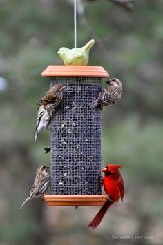 DIY - Sunflower Seed Tower Bird Feeder #diy #birdfeeder #dan330 http://livedan330.com/2015/03/23/diy-sunflower-seed-tower-bird-feeder/