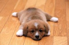 Happy National Puppy Day! Here are some fun puppy pics and quotes