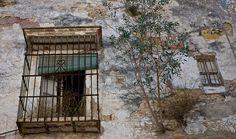 windows and plant Windows, Explore, Plants, Painting, Art, World, Blue, Craft Art, Painting Art