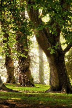 Sun Rays, The Enchanted Wood photo via lutin