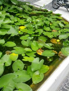 Pond in Lincoln Mall, South Beach, Miami