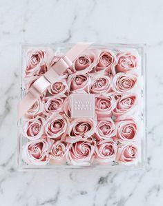Melisse andre blüht Rosen