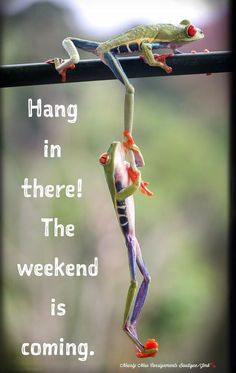 Wednesday Humor - Hump Day: Cute Animals - Hang in there! The weekend is coming. Humor 'Give us a leg-up!' Frogs use each other to climb a tree # wednesday Humor Happy Wednesday Pictures, Happy Wednesday Quotes, Wednesday Humor, Its Friday Quotes, Thursday Morning Quotes, Wednesday Hump Day, Monday Greetings, Morning Sayings, Friday Memes
