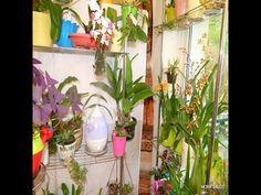 Humedad para mis Orquideas, la calefacción les reseca el ambiente.