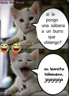 Momos para virgos que usan pacman Mexican Humor, Spanish Memes, Adult Humor, Really Funny, Bts Memes, Funny Images, Instagram Story, Food Instagram, Cat Lovers