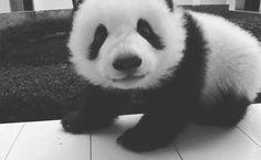 panda giif 13
