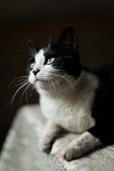 My future cat will be a mix between a scotish fold and bobtailed munchkin, and his name will be Mr.Sir! dead set on this hahaha