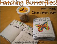 Hatching Butterflies with free Observation Book Marshall-Piercy & Krystal Fun alternative experiment when we get there or. Montessori Science, Primary Science, Preschool Science, Science Classroom, Science Education, Teaching Science, Science For Kids, Science Activities, Nature Activities