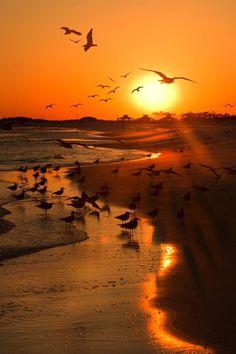 Seagulls at the sunset beach / nature / landscape photography Sunset Beach, Beach Sunsets, Sunset Love, Pismo Beach, Sunset Colors, Summer Sunset, Amazing Sunsets, Amazing Nature, Beautiful Sunrise