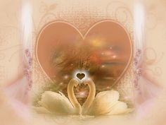 Par leur tendre regard qui doucement se pose Sur le bord de l'étang où naissent leurs amours, Tel un souffle divin, la fraîcheur de la rose, Ils longent le miroir des rives alentours. En perles de velours dont l'ardeur se dévoile Par l'extrême douceur...