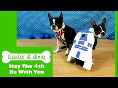 Dog Riding Roomba in R2Dog2 Costume - YouTube
