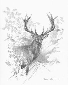 #reddeer #wildlifeart #wildlifeartist Wildlife Paintings, Wildlife Art, Animal Paintings, Animal Sketches, Animal Drawings, Art Drawings, Realistic Hair Drawing, Reindeer Drawing, Wildlife Quilts