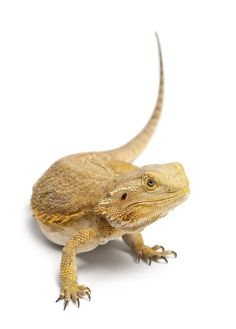 Pets Please NEWS Did you know that in Australia you need a Reptile Keepers Licence to own, breed and sell Reptiles and Amphibians. You can read more about this and where to go for a licence by clicking on the link.  http://petsplease.com.au/news/who-to-contact-for-reptile-keepers-licences-in-australia-for-all-states-and-territories-47